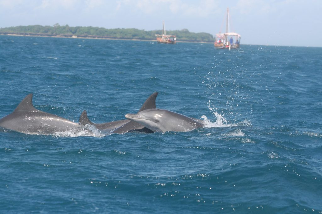 Dolphins at Kisite Mpunguti
