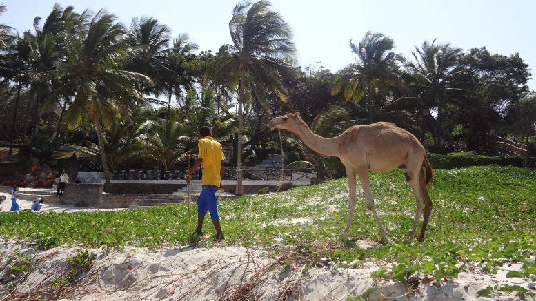 Kilifi public beach