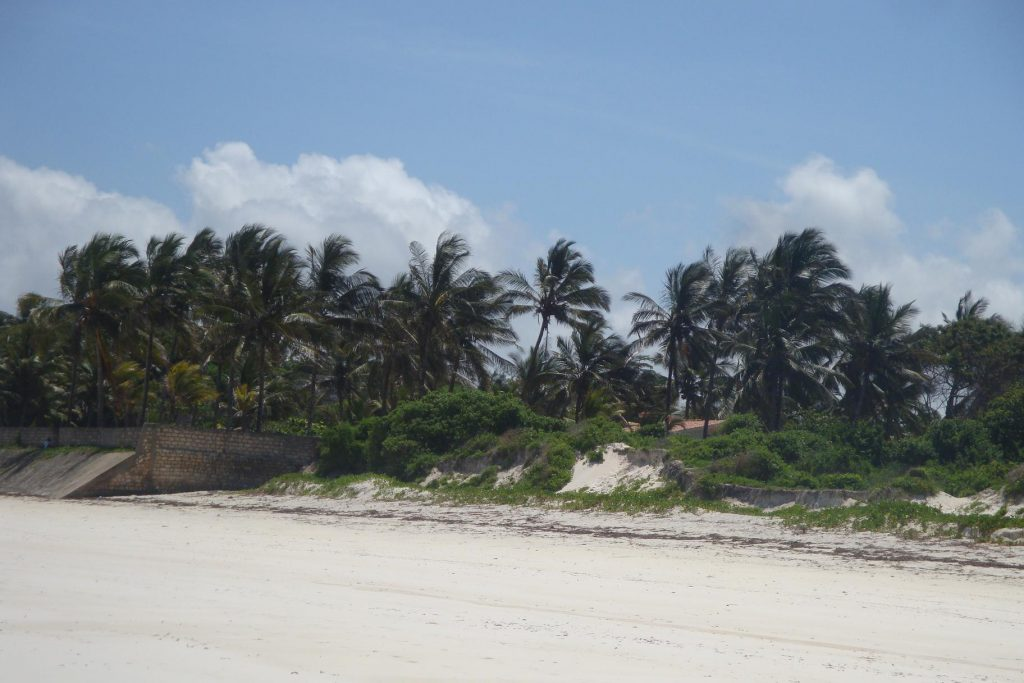 Kilifi public beach has unique palm trees that offer a glamorous feel of the life on the beach